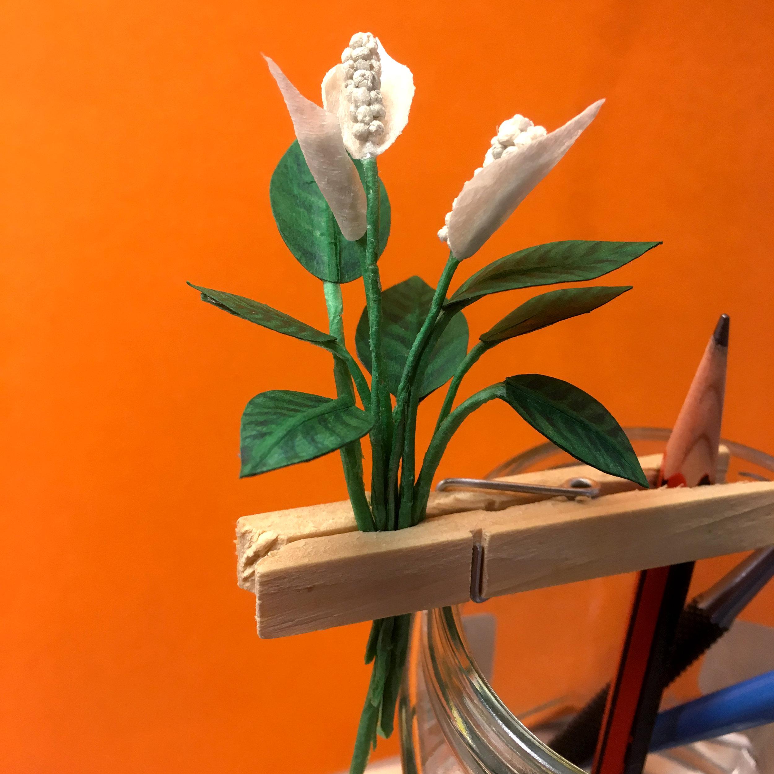 wip plant.jpg