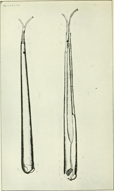 A shipworm. It's quite simple, physiologically.  From Wikimedia Commons.