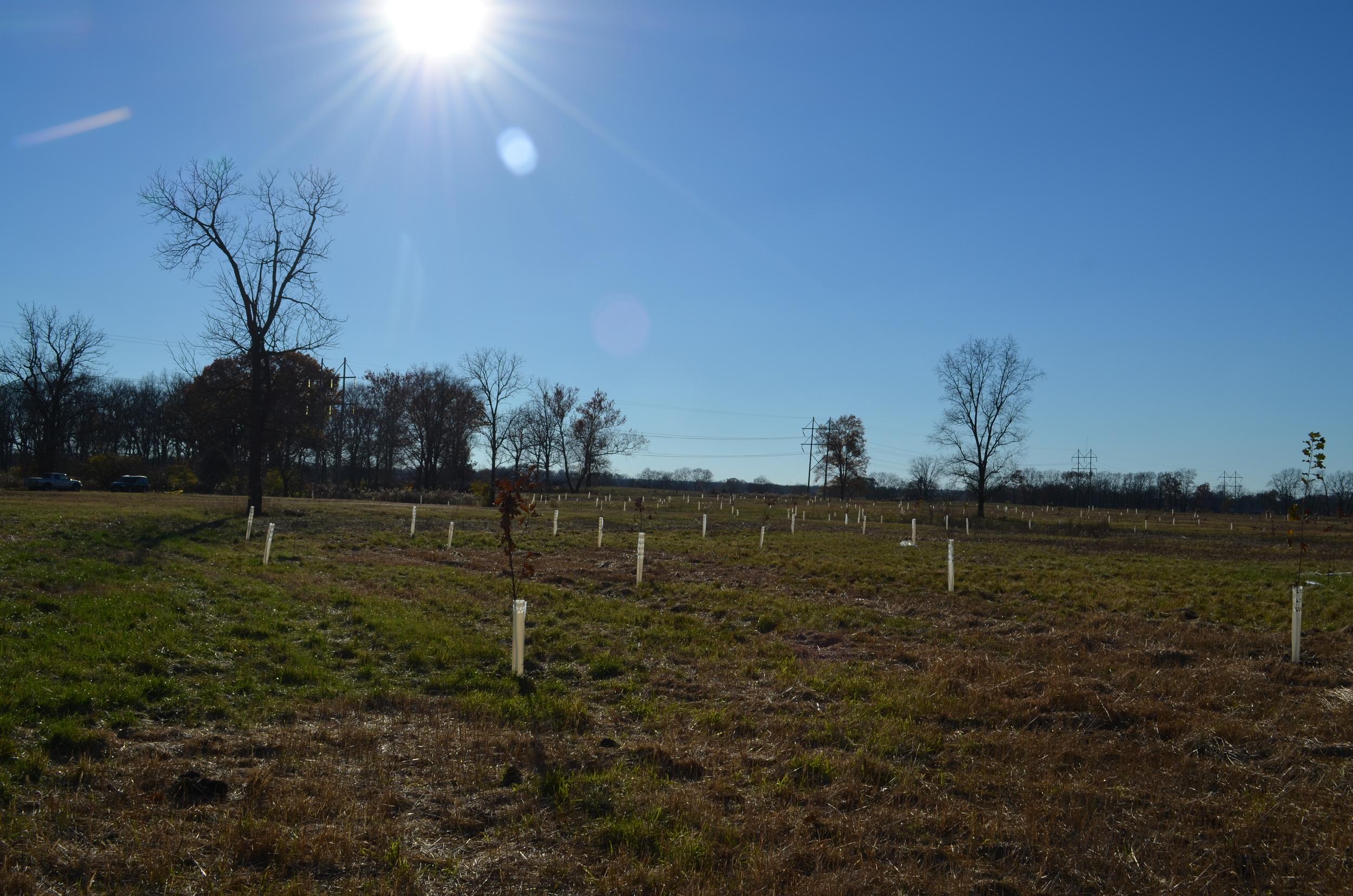 Planted Lost Creek.JPG
