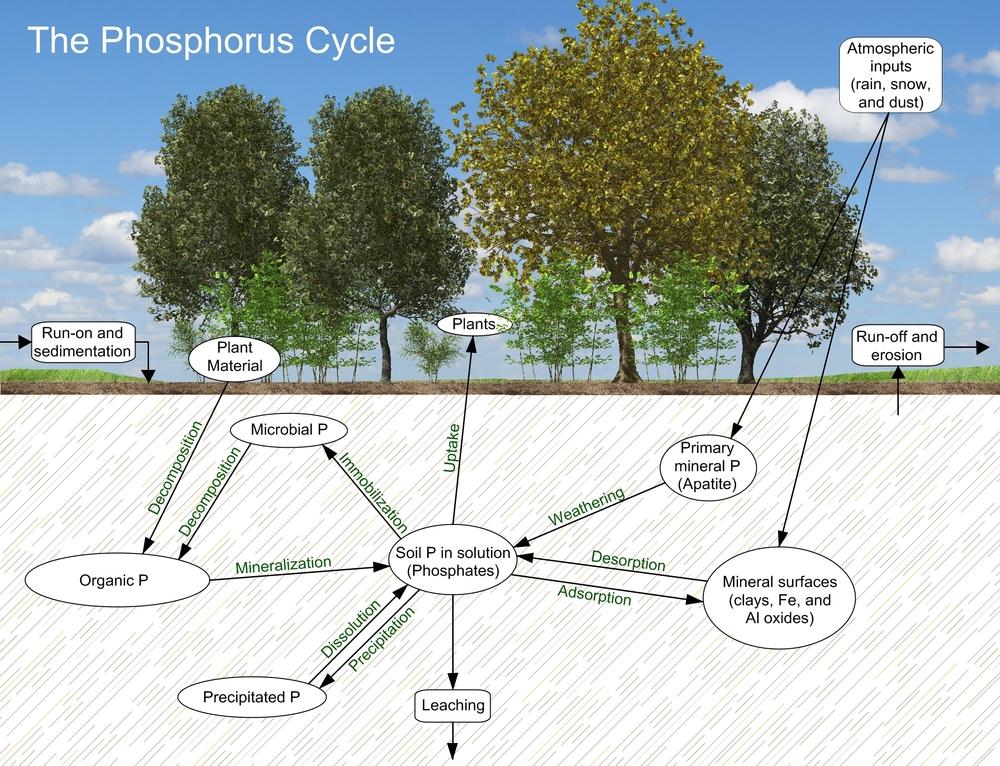 PhosporusCycle.jpg