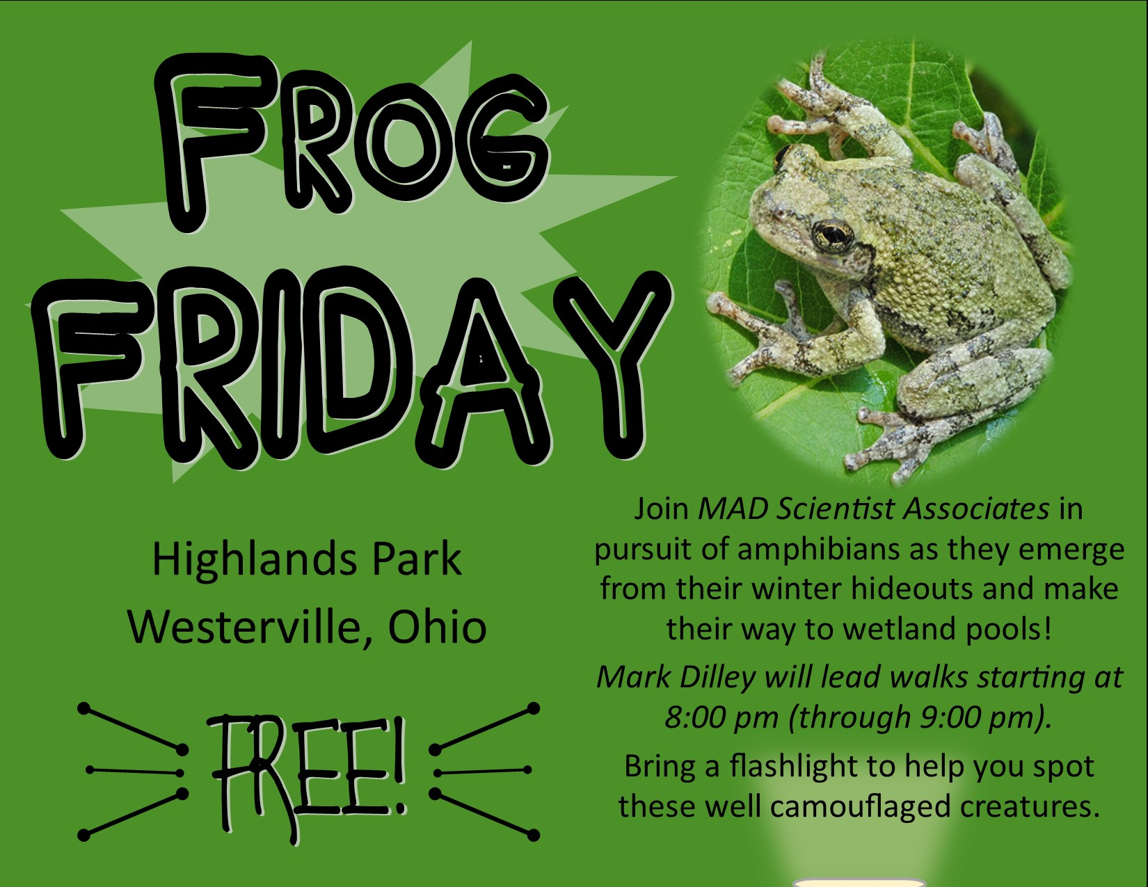 FROG FRIDAY - GRAY TREE FROG - MAD SCIENTIST ASSOC