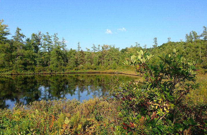 Triangle Lake Bog State Nature Preserve   | BISNICKS / WIKIPEDIA COMMONS