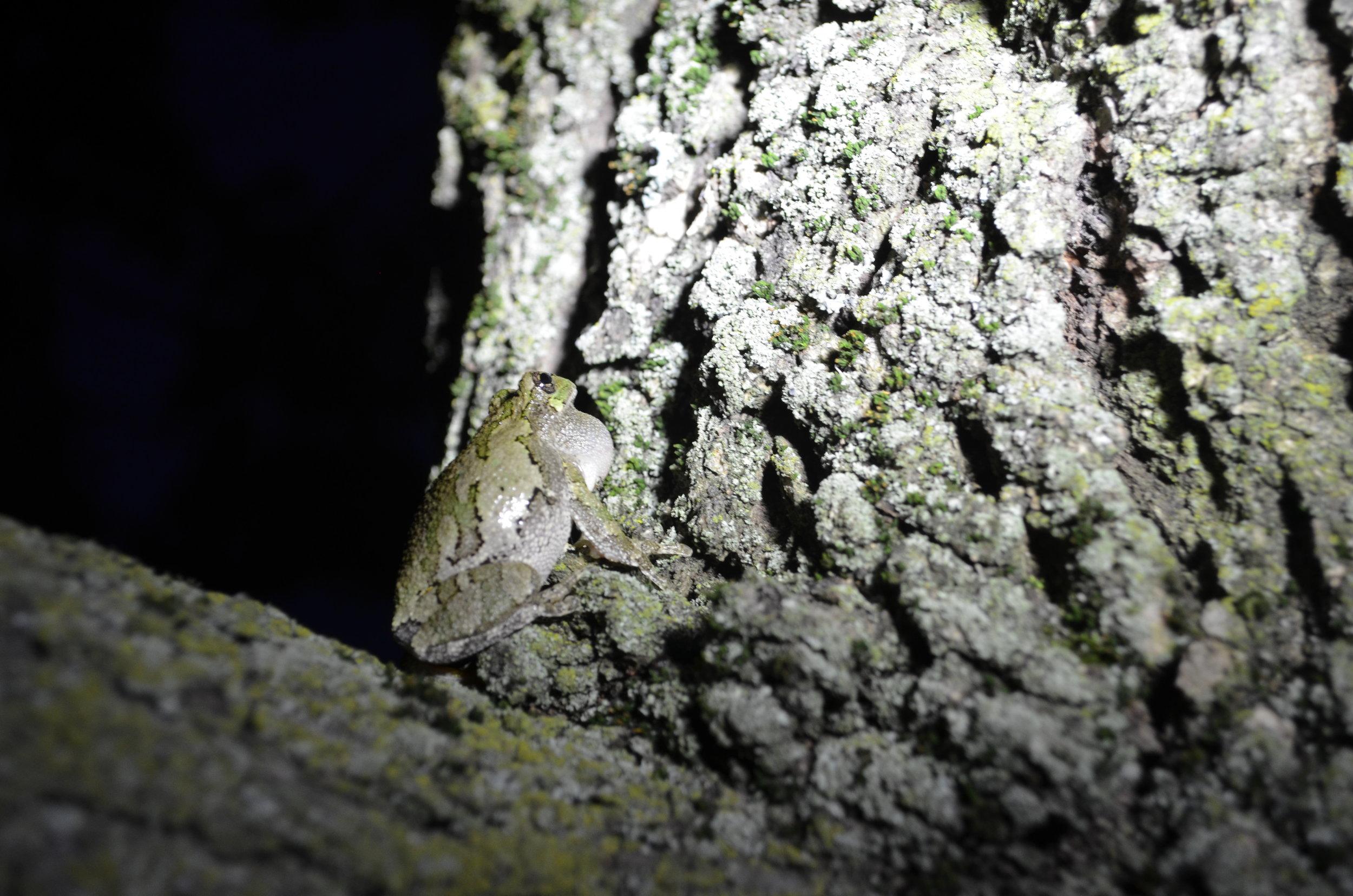 FrogFridayFrog.jpg