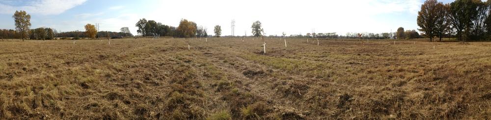 Planted+Lost+Creek+(2).jpg
