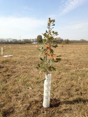 Planting+at+Lost+Creek.jpg