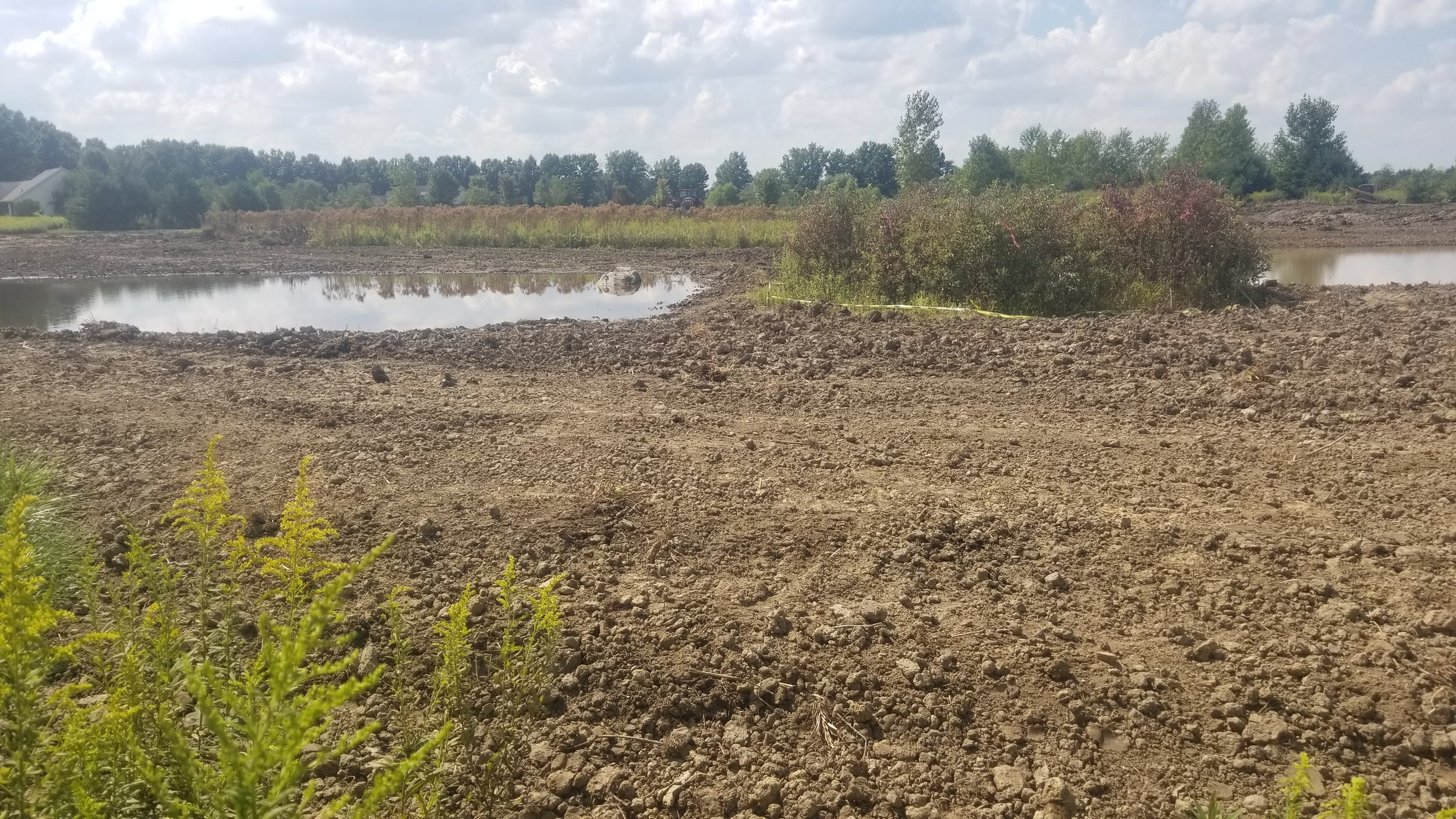Homeowner wetland restoration project.