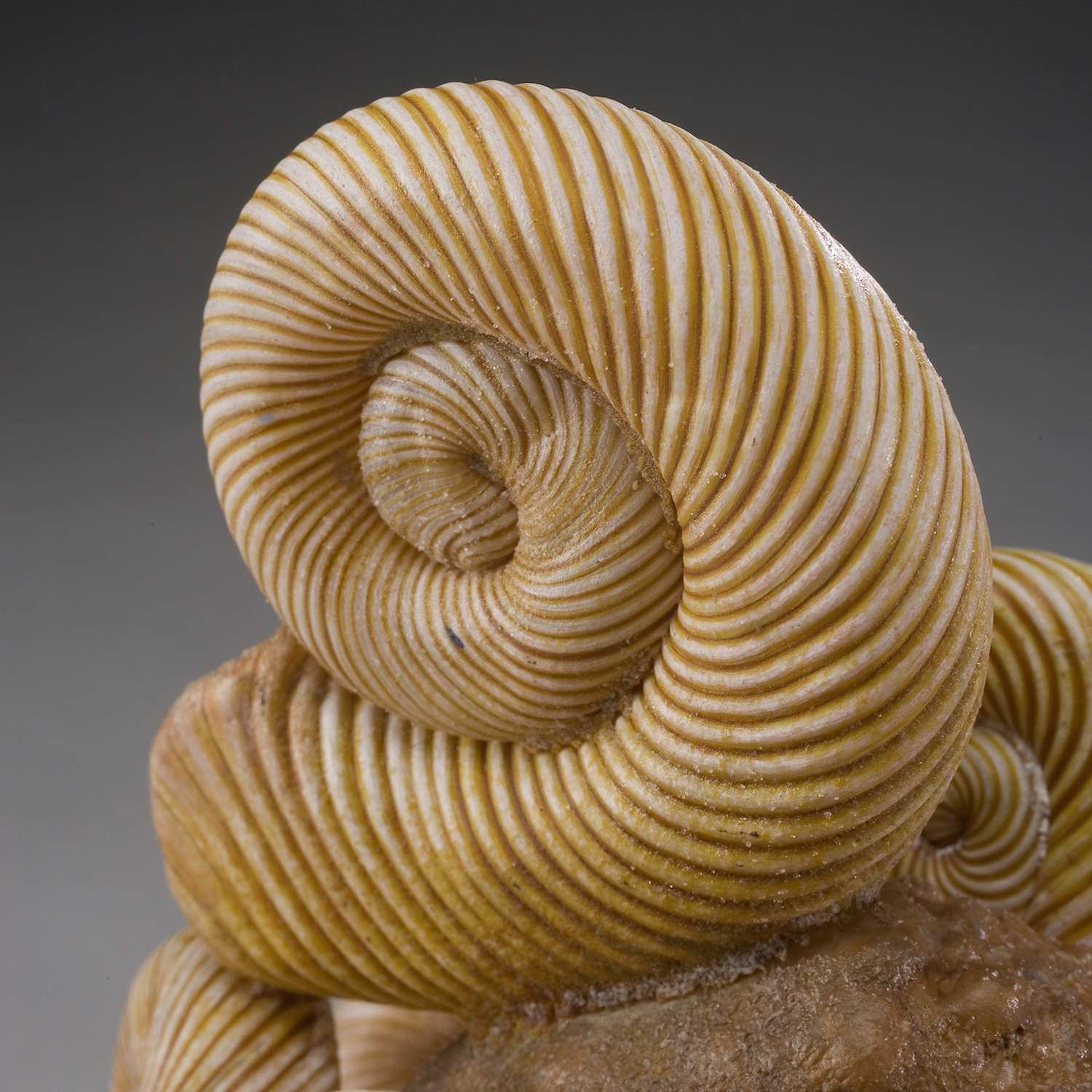 Stone and Fossil Series