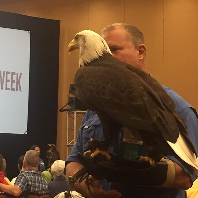 In case you missed it!  Birds of prey presentation was a hit. #wildernesswildlifeweek