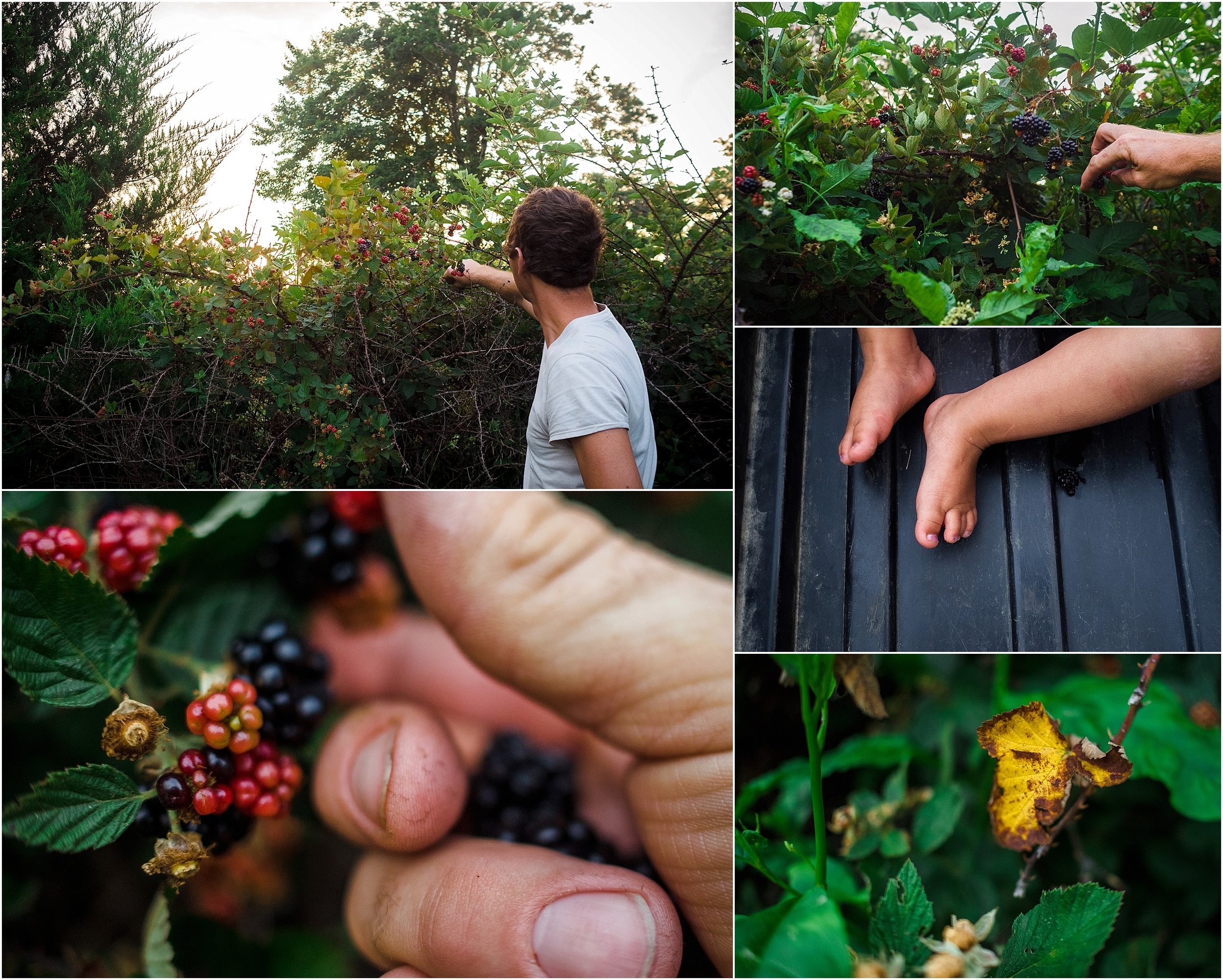 blackberry picking in backyard, documentary photographer