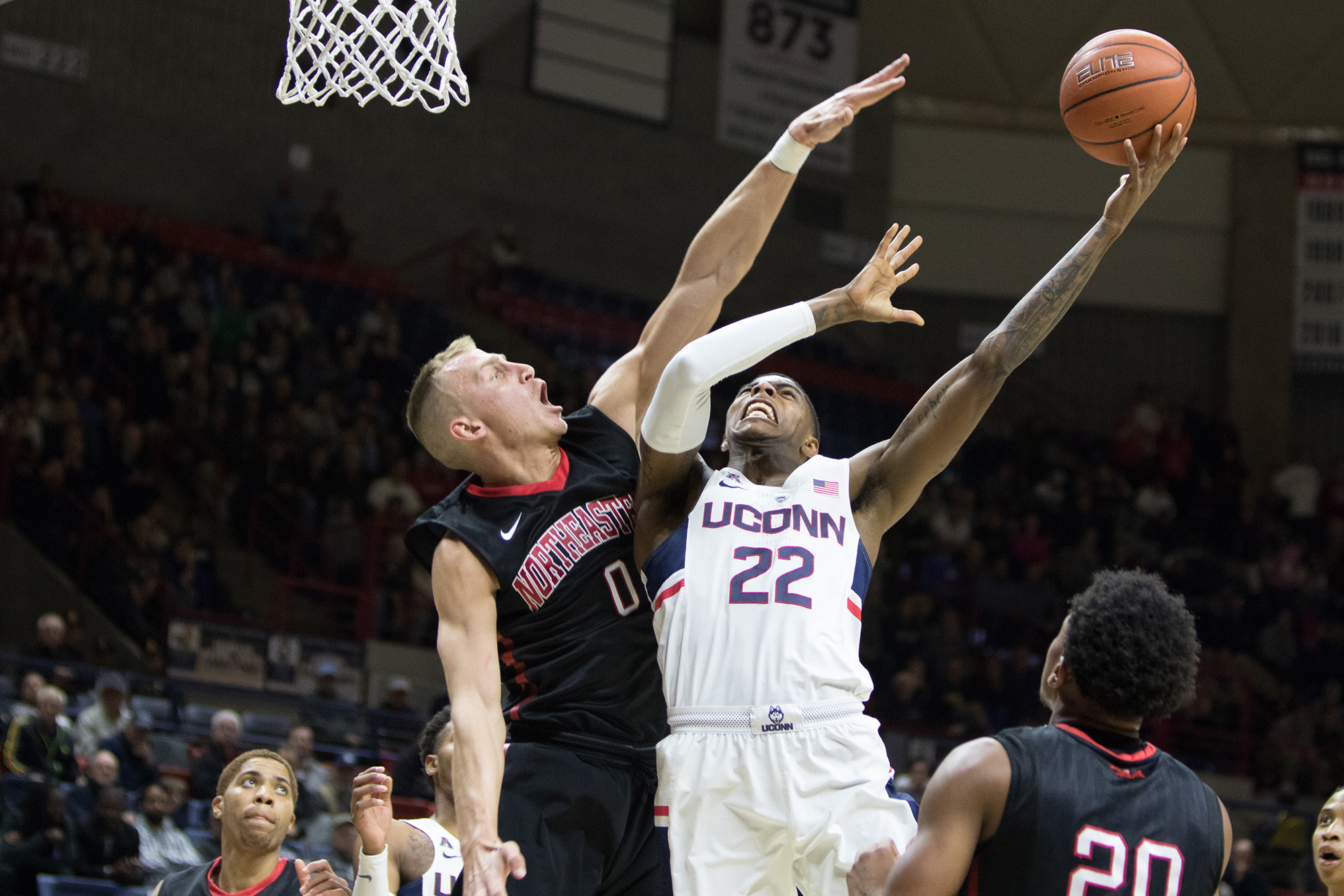 Pictured:  Terrier Larrier, number 22, against Northeastern opponent. The UConn mens' basketball team defeated Southern Connecticut 94-65 on Saturday Nov. 4,2016 at Gampel Pavilion. Senior forward Rodney Purvis led all scorers with 19 points.(Jackson Haigis/ The Daily Campus)