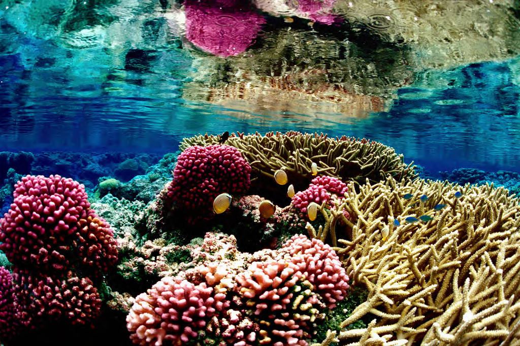 Coral Reefs are just one example of the world's actions leading to rising temperatures and climate change that has had such a harmful impact on the planet.  Photo by U.S. Fish and Wildlife Service Headquarters from Flickr Creative Commons