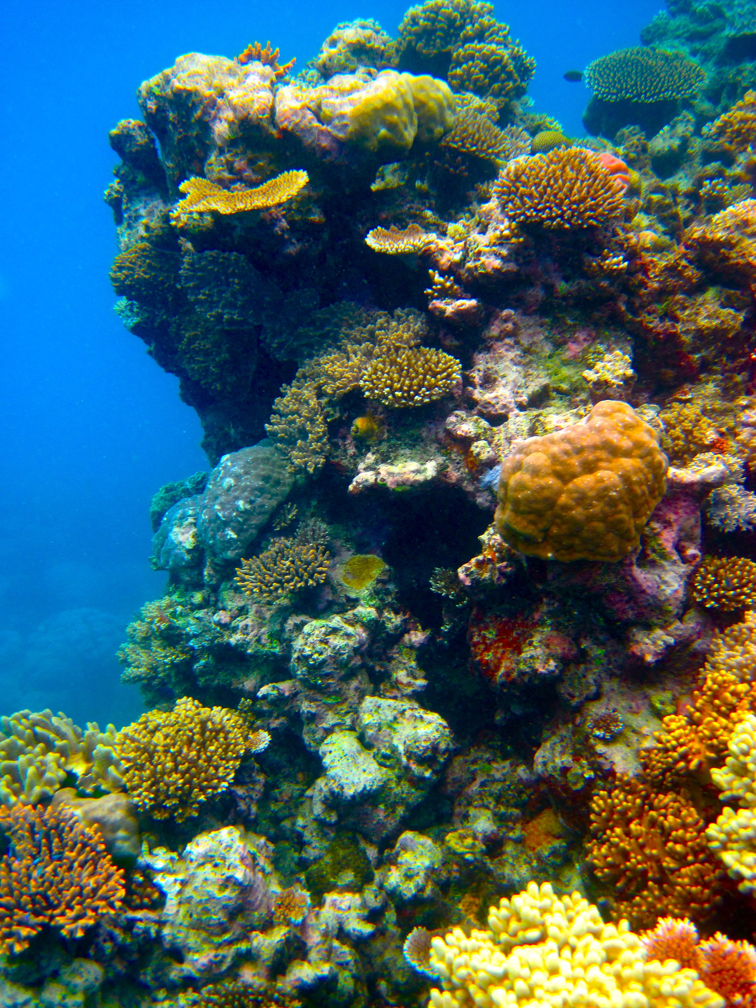 The Australian Great Barrier Reef is one of the many places impacted by coral bleaching, endangering the habitat and life within it.  Photo by Kyle Taylor from Flickr Creative Commons