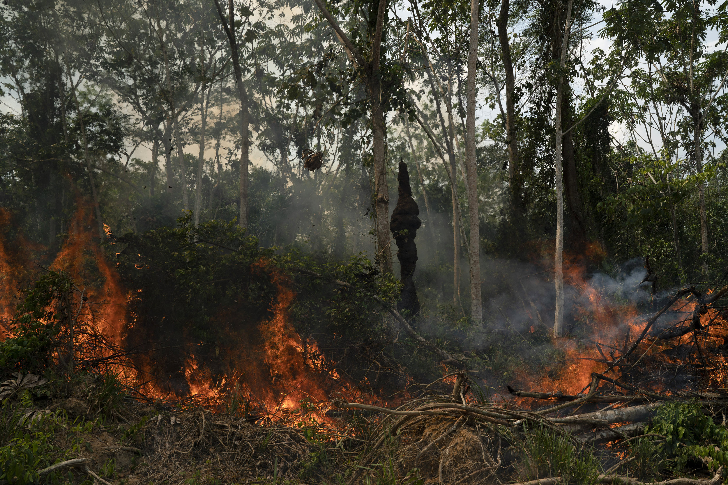 Freshly cut jungle begins to burn at the Nova Fronteira region in Novo Progresso, Brazil, Tuesday, Sept. 3, 2019.  Photo from the Associated Press.