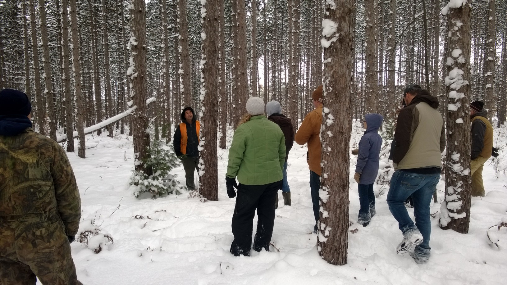 A hydrolake procurment forester identifies desireable qualities for red pine harvest