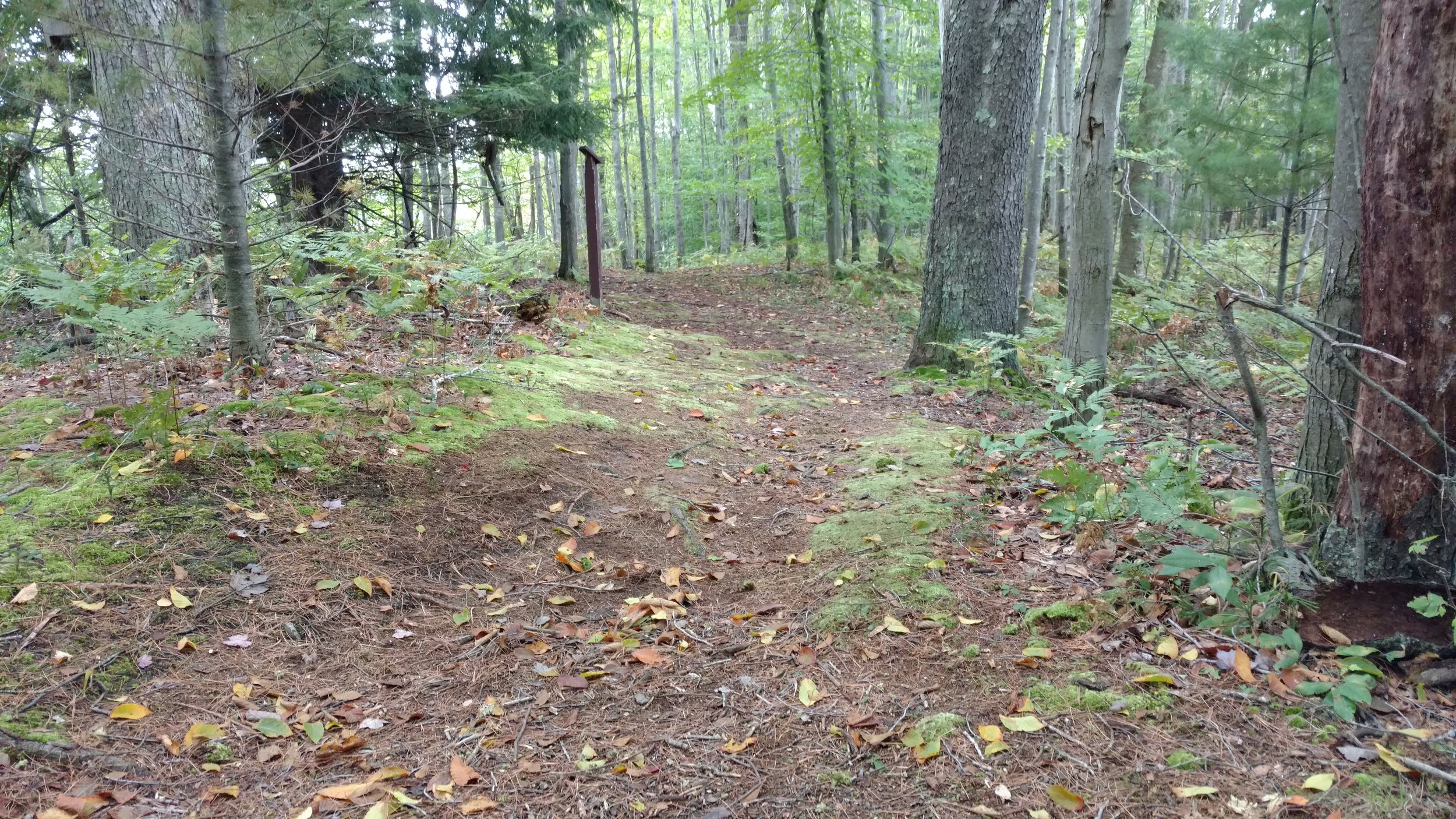 Forest Trails at Gales Pond