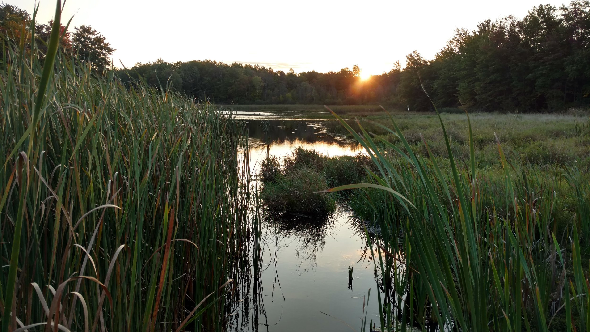 September at Gales Pond