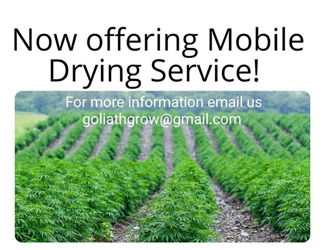 We are now offering Mobile Drying Service for Hemp Farmers! 🚜🌿 . Our units are custom designed and built to quickly dry your harvest while preserving terpenes and appearance. We don't just blow hot air. Our technology gently extracts the water using ionic and infrared technology. While the negative ions help speed up the drying time, they also help kill off any mildew or mold that may be present. We are able to fully control the unit to give the farmer the desired dry they are looking for. If you have any questions or would like book an appointment, email us @ goliathgrow@gmail.com . . . #Oregon #Hemp #SouthernOregon #Douglascounty #Josiphinecounty #Jacksoncounty #klammathcounty #Ashland #Medford #CentralPoint #RogueRiver #GrantsPass #Selma #CaveJunction #Williams #Jacksonville #CBD #CBG #Thc #cannabiscommunity #oregonsungrown #sungrown #farming #organicfarming #NoTill #ReapWhatYouSow #GoliathGrow