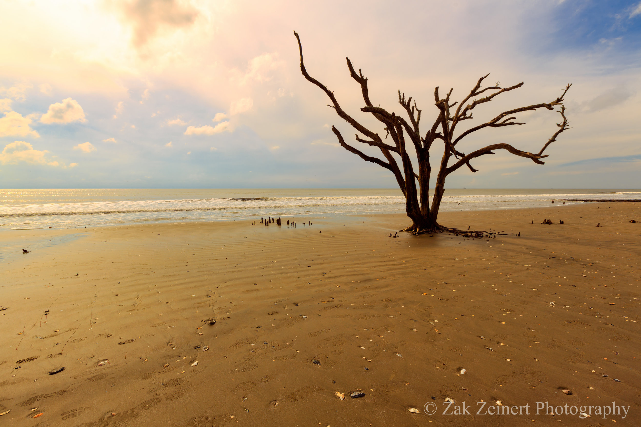 Botany Bay outside of Charleston. The beach is littered with seashells that crunch under your feet and desolate looking trees as far as the eye can see.