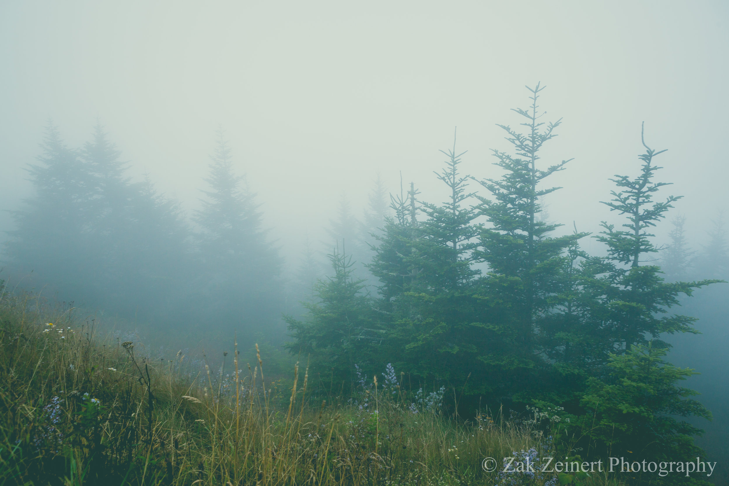 View from Clingman's Dome with the intense fog