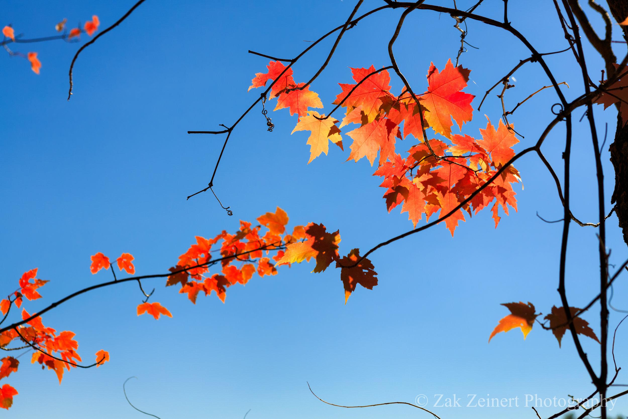 Fall colors outside of Boston
