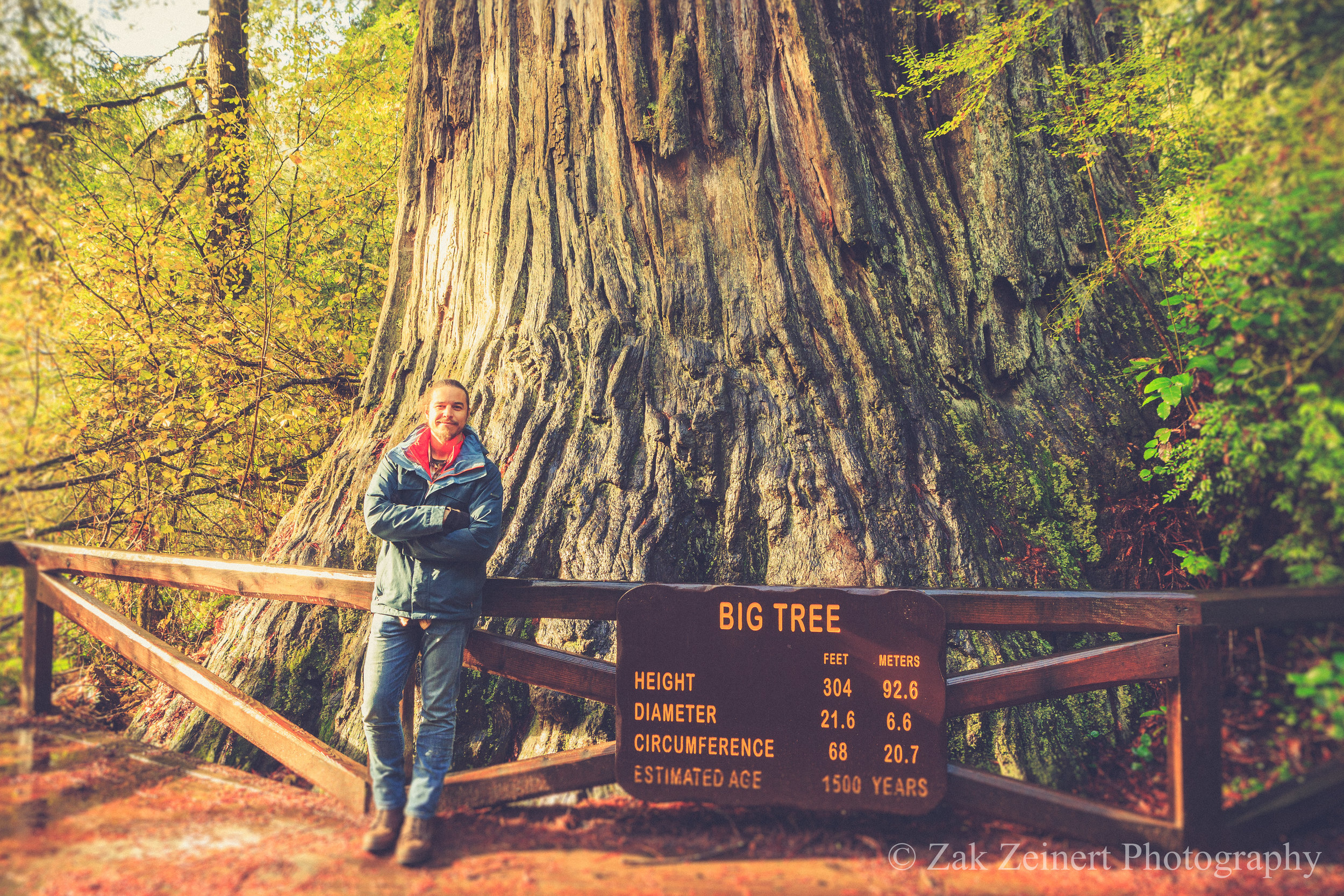 Big Tree in Redwood National Forest