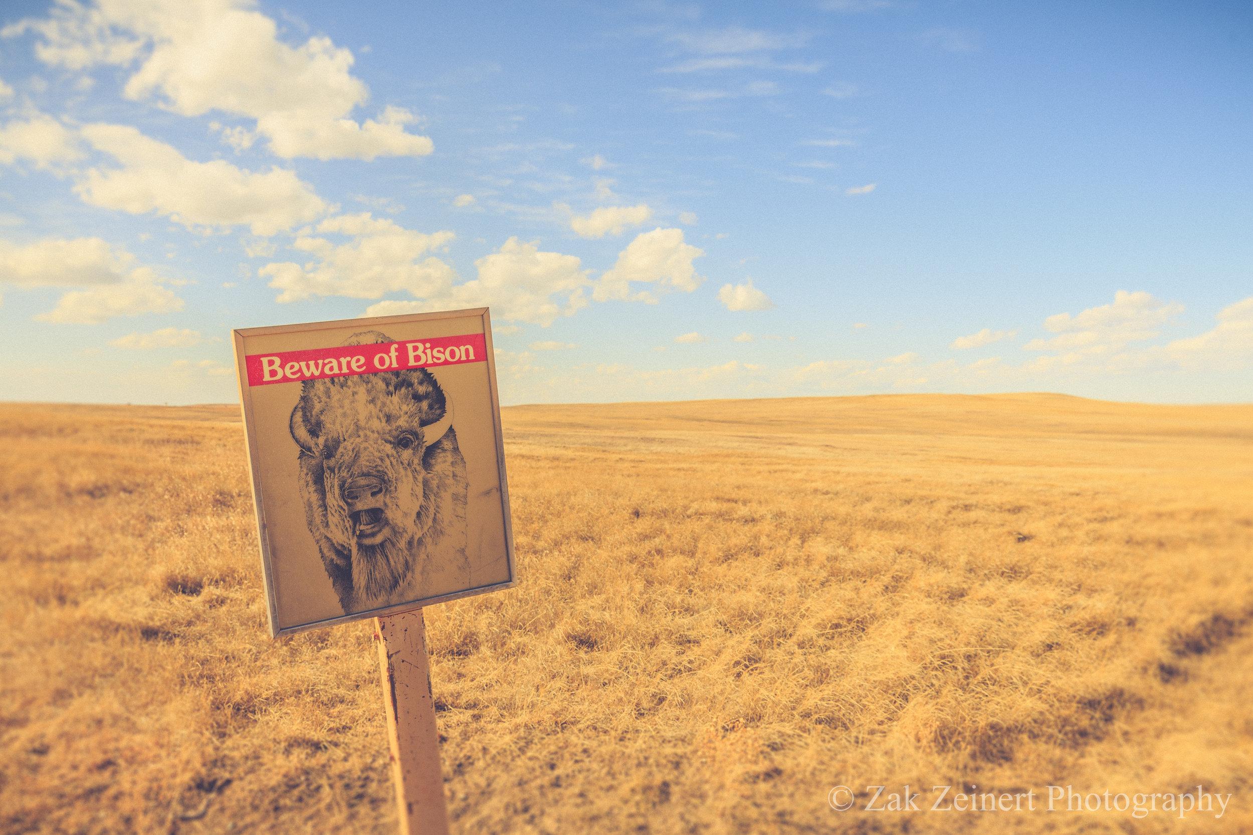 Ironically, compared to North Dakota, I barely saw any bison in South Dakota