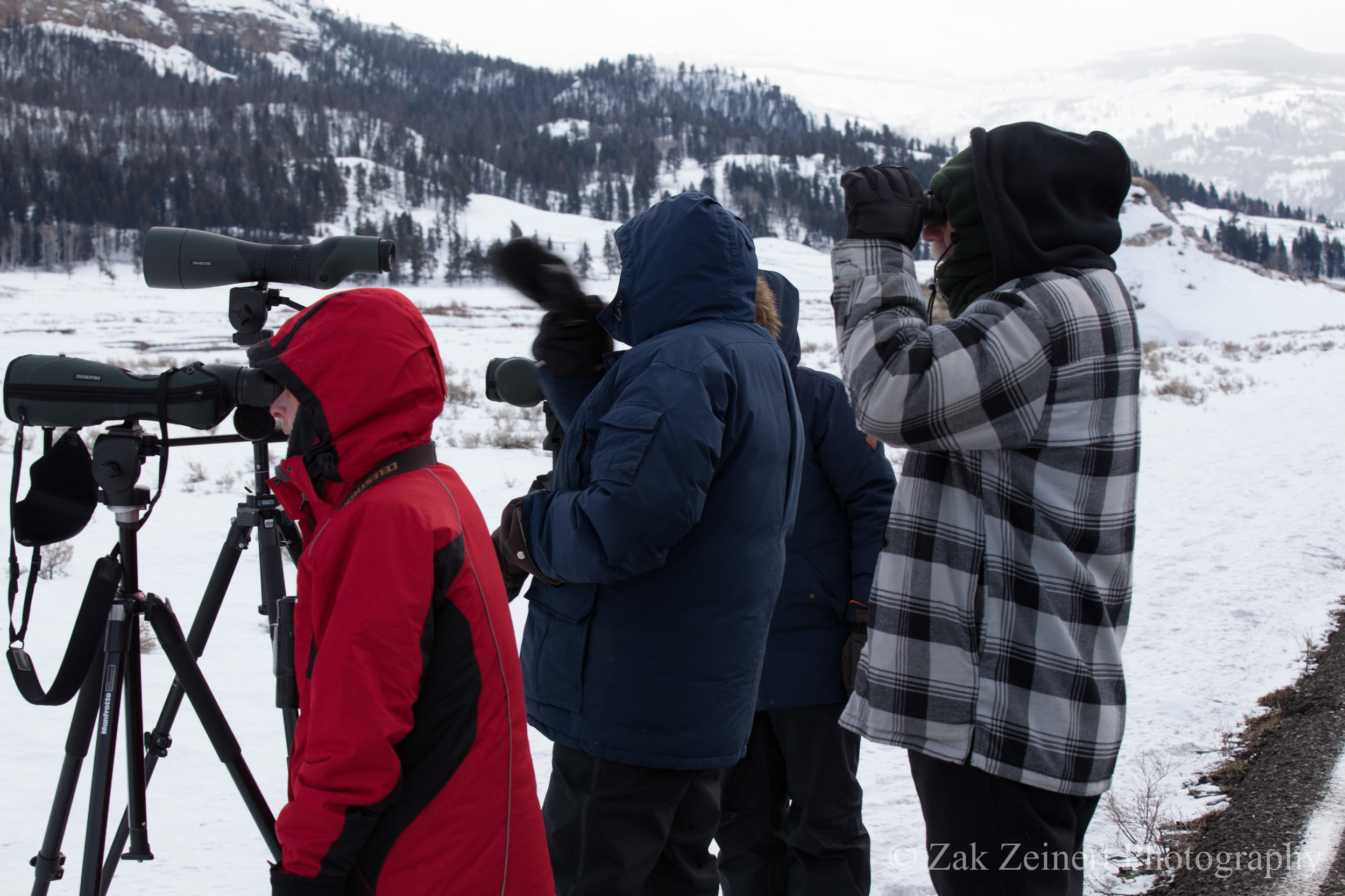 Wildlife viewers watching the elk-hunt