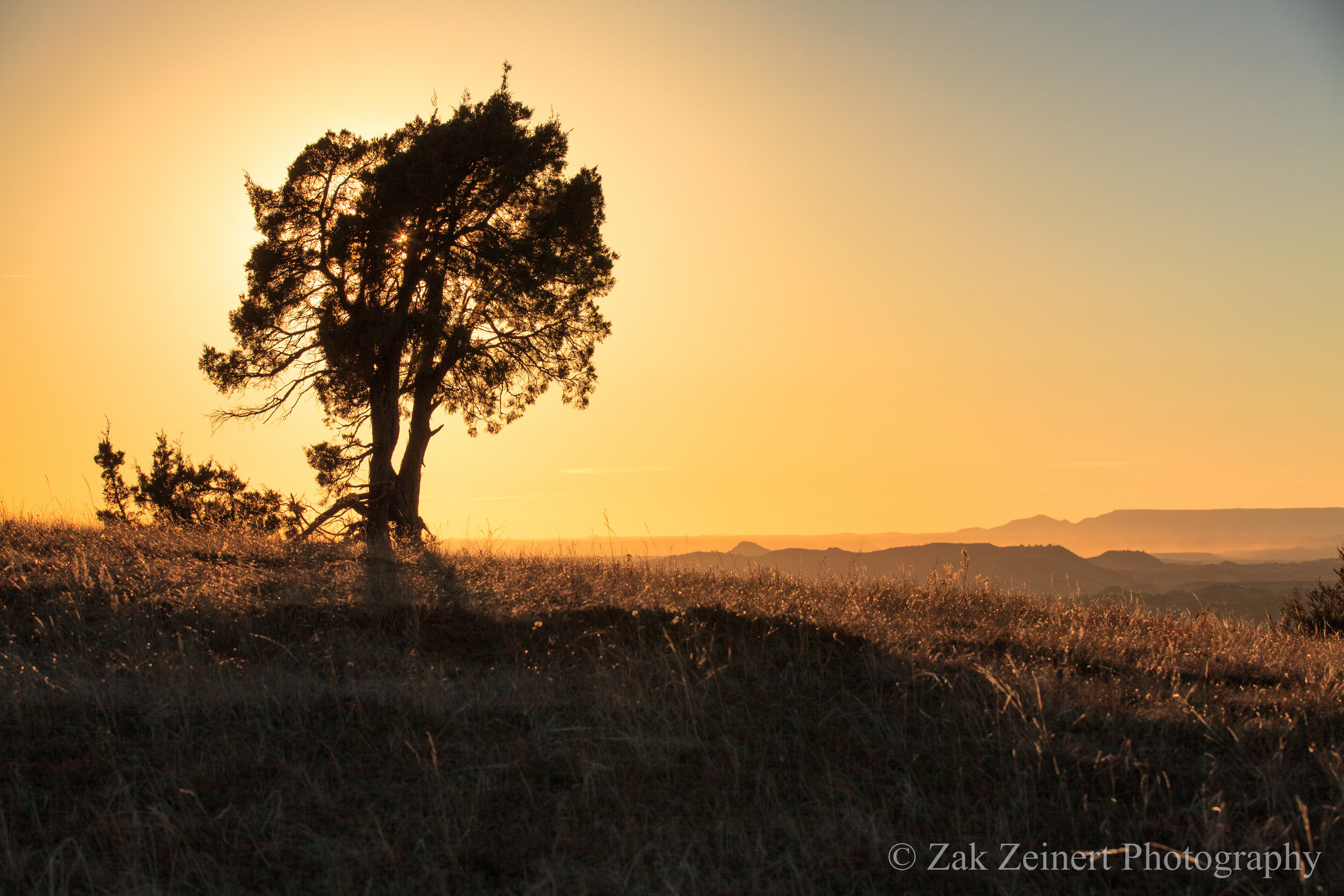 A lone tree silhouetted against the sunset on Buck Hill