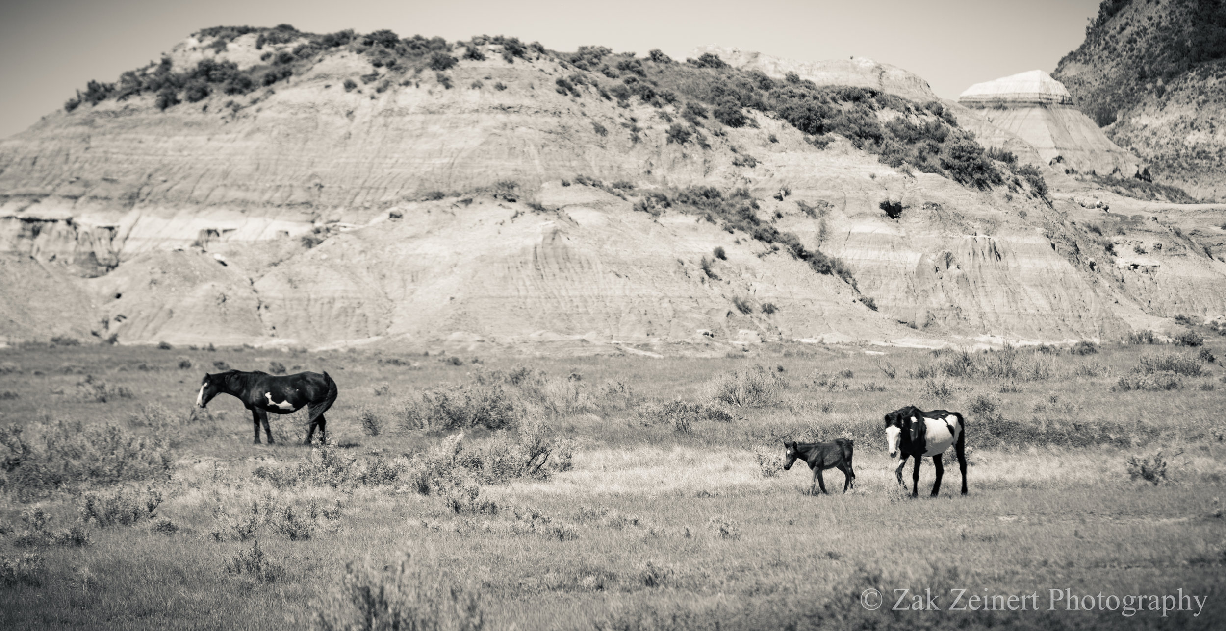 Two wild horses and a young foal graze upon the Badlands near the Lower Talkington Trail