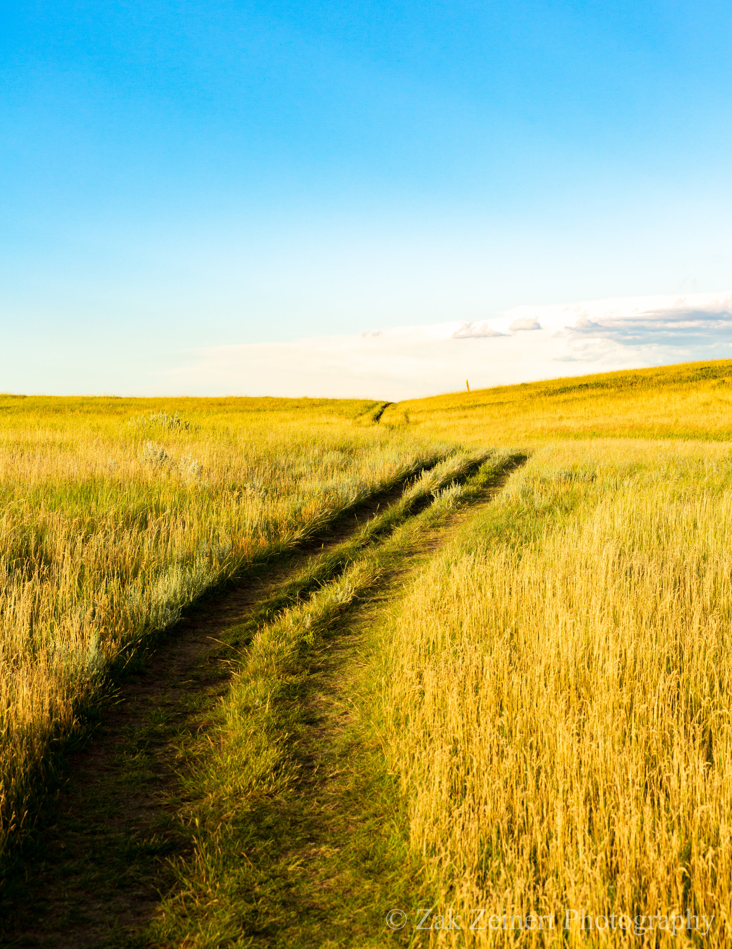 The well-maintained trail leads you through golden grasslands on the Petrified Forest Loop