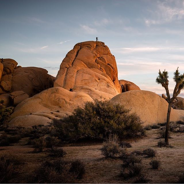 Joshua Tree National Park. One of the most accessible parks in terms of being able to just jump out of your car and go explore the natural world. I'd like to go back sometime soon and climb some of those rocks. I took this photo back way back in 2016. I have never posted it though because I never felt like I could bring it to life in the digital darkroom. Fast forward three years, and just playing around today I produced this. I'm quite pleased with the results. It's a little more stylized than normal, but it symbolizes progress #joshuatreenationalpark #joshuatree #california #californiaig #visitcalifornia #joshuatreenps #desert #sunset #landscapephotography #wildcalifornia #californialove #topcaliforniaphoto #wonderful_places