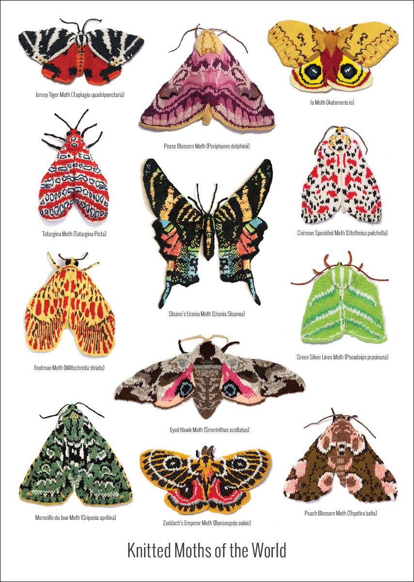knitted-moths-A3-Poster-outline.jpg