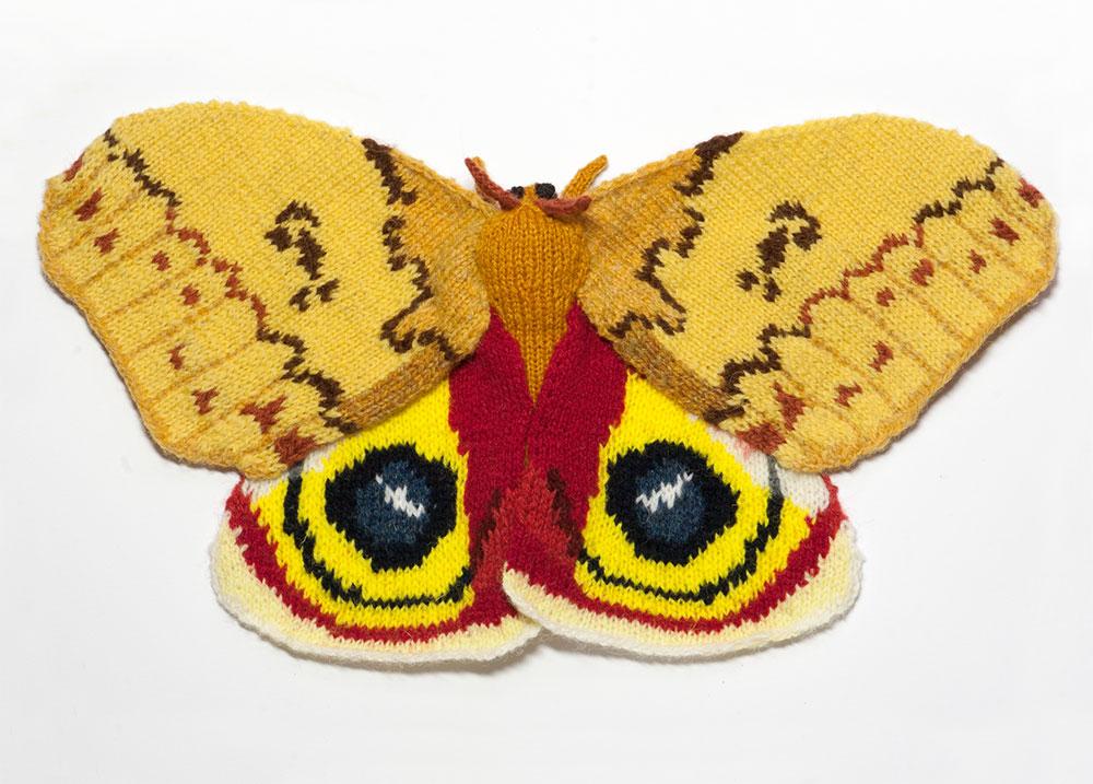 automeris-io-moth.jpg