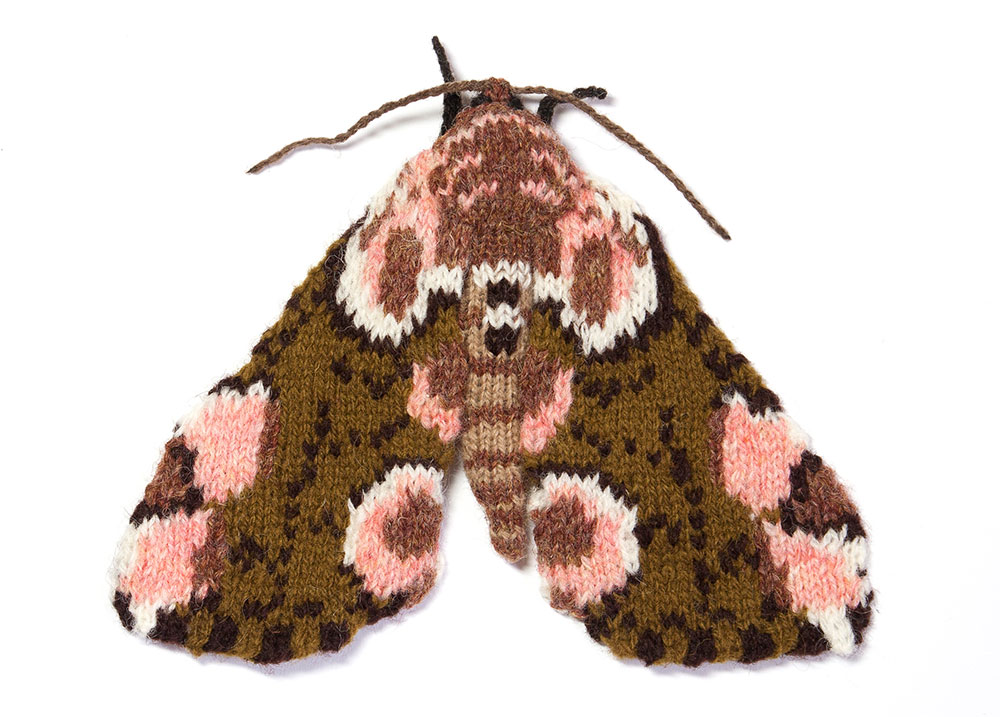 peach-blossom-moth.jpg