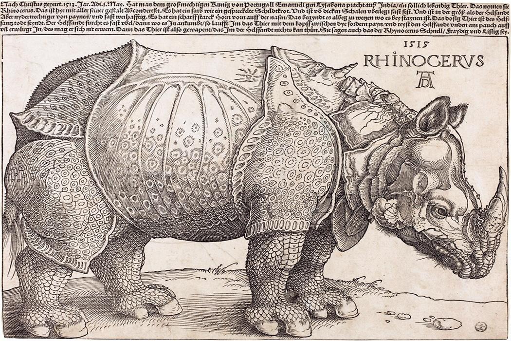 image: Albrecht Dürer