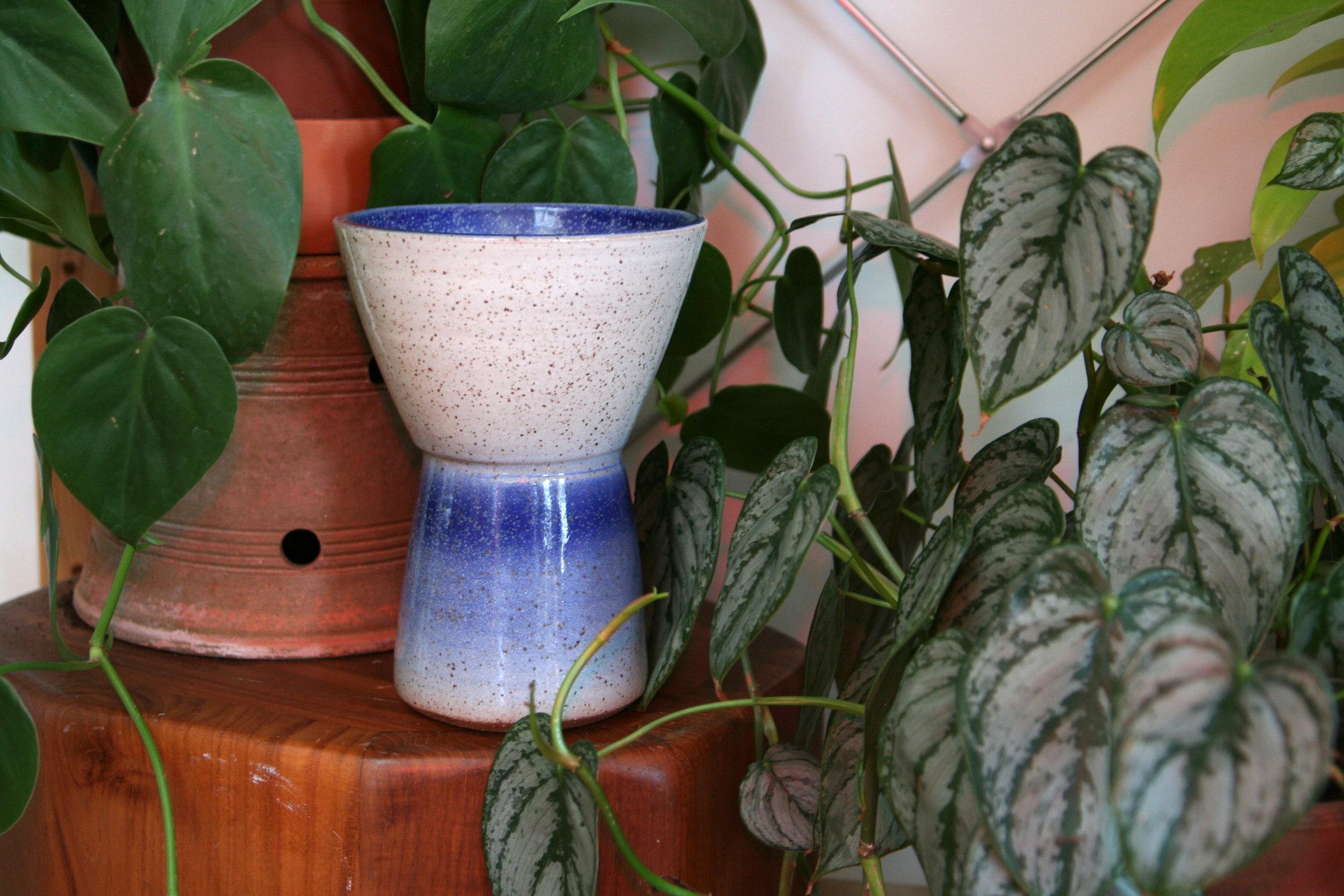 blue white plant.JPG