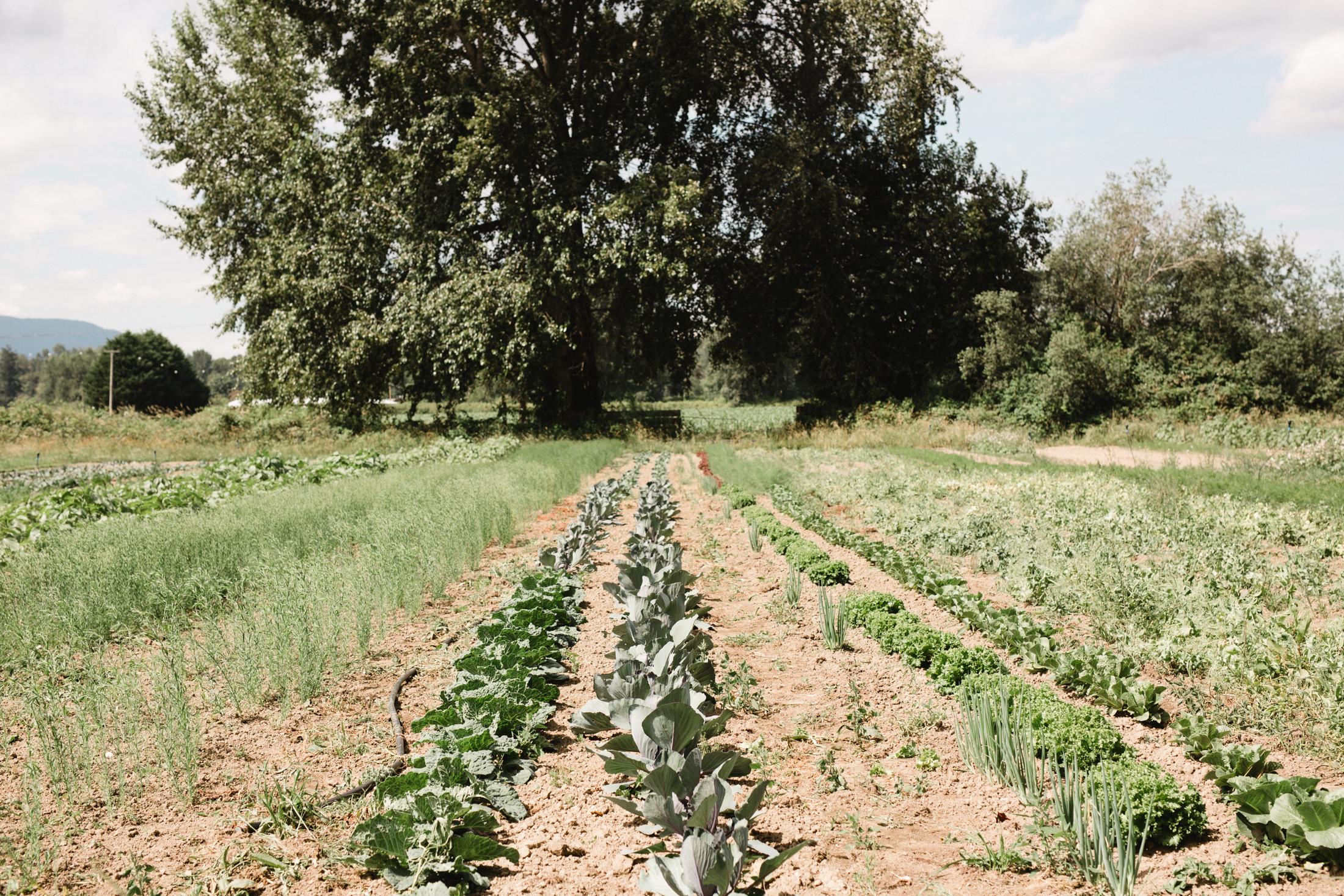 manna farm-21.jpg