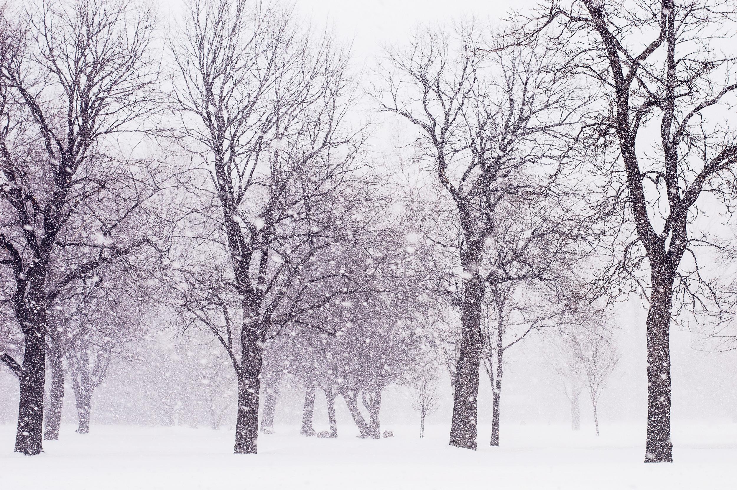 Endless Winter © Deena Roth Photography