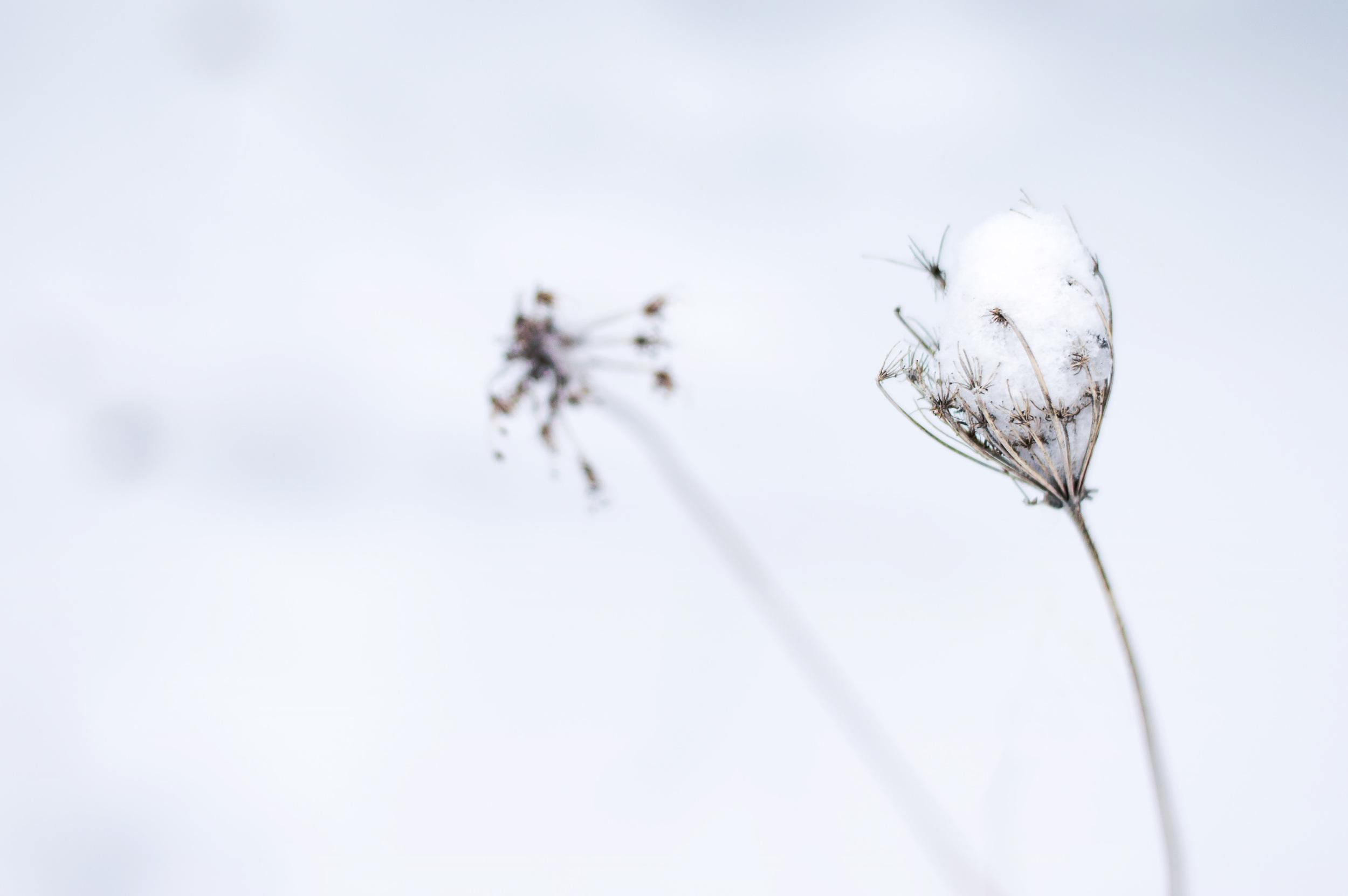 Purity © Deena Roth Photography