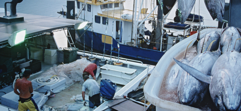 ASSESS - First we partner with suppliers to assess their supply chain, identify, and onboard participating fishers.