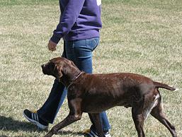 Dog_commands_heel_2.jpg