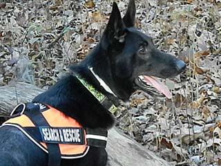 Grissom Search And Rescue Dog