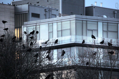 Roost_P17050-S_Roost_The_Crows_of_Downtown_Portland_Film_Photo_1.jpg