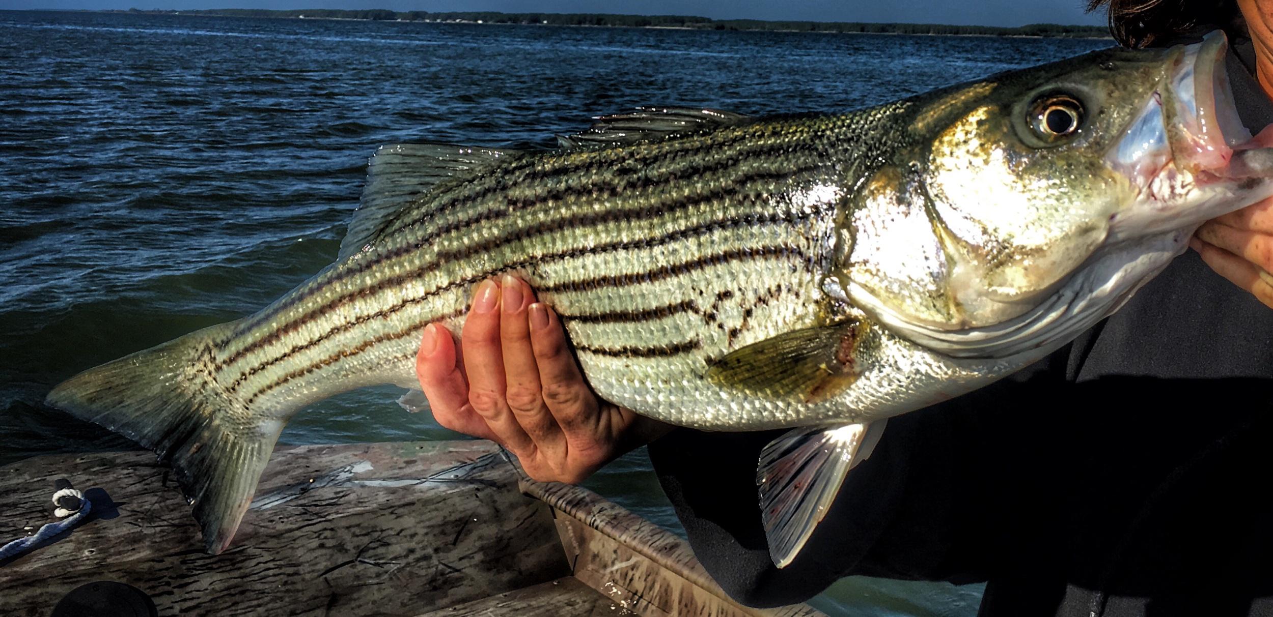 Tributaries & Estuaries Fishing