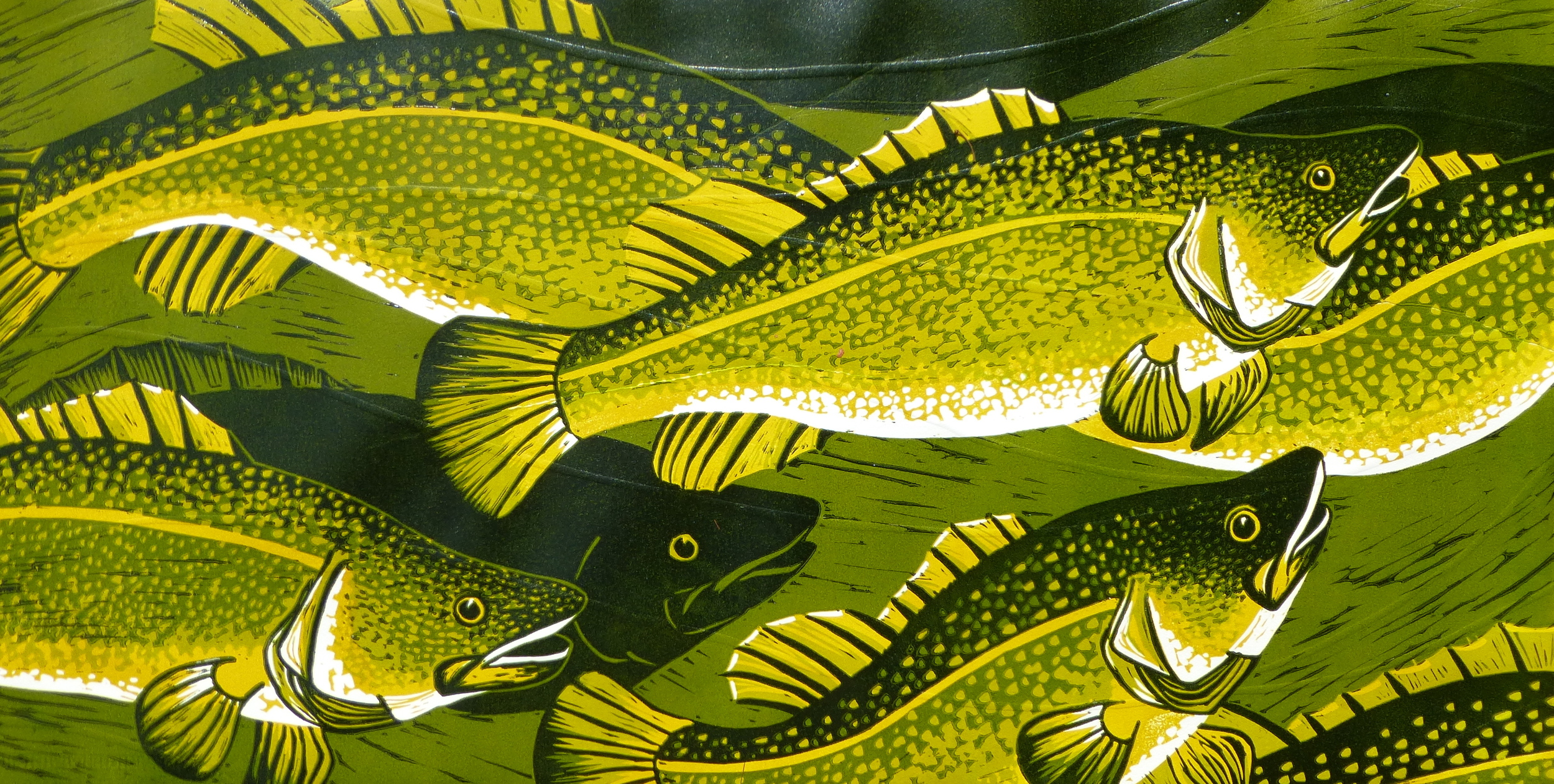 """Murray Cod Swimming   Reduction linocut with embossing, 2013  Irregular edition of 6  Image size (bleed print): 48.5 cm x 97 cm  $600                      Normal   0           false   false   false     EN-AU   JA   X-NONE                                                                                                                                                                                                                                                                                                                                                                            /* Style Definitions */ table.MsoNormalTable {mso-style-name:""""Table Normal""""; mso-tstyle-rowband-size:0; mso-tstyle-colband-size:0; mso-style-noshow:yes; mso-style-priority:99; mso-style-parent:""""""""; mso-padding-alt:0cm 5.4pt 0cm 5.4pt; mso-para-margin:0cm; mso-para-margin-bottom:.0001pt; mso-pagination:widow-orphan; font-size:10.0pt; font-family:""""Times New Roman"""";}         Although Murray cod ( Maccullochella peelii)  are now a threatened species, they once inhabited much of the Murray-Darling basin in great numbers.  Murray Cod Swimming  hints at what once was, and could be again."""