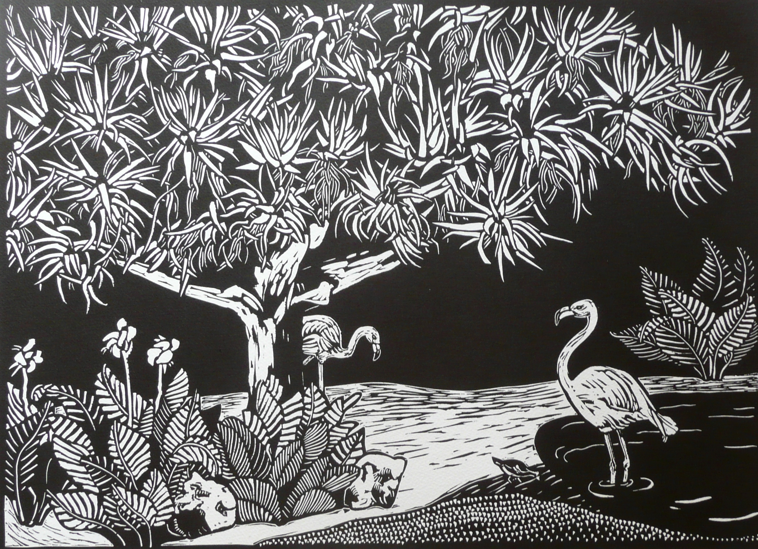 """Flamingos at Adelaide Zoo   Linocut, 2012  Edition of 10  Image size: 38cm x 52.5 cm  Paper size:56 cm x 66.5 cm  $260                      Normal   0           false   false   false     EN-AU   JA   X-NONE                                                                                                                                                                                                                                                                                                                                                                           /* Style Definitions */ table.MsoNormalTable {mso-style-name:""""Table Normal""""; mso-tstyle-rowband-size:0; mso-tstyle-colband-size:0; mso-style-noshow:yes; mso-style-priority:99; mso-style-parent:""""""""; mso-padding-alt:0cm 5.4pt 0cm 5.4pt; mso-para-margin:0cm; mso-para-margin-bottom:.0001pt; mso-pagination:widow-orphan; font-size:10.0pt; font-family:""""Times New Roman"""";}       Flamingos at Adelaide Zoo    depicts the Flamingo Grotto, which was constructed in 1885 and is the oldest exhibit in the zoo. The grotto includes a Dragon's Blood tree ( Dracaena draco ), a pond, and two flamingos. Since the making of this artwork, the Greater Flamingo died at the age of 83. The Greater Flamingo ( Phoenicopterus ruber roseus ) was the larger of the two and was usually seen grooming its feathers on the lawn. The Chilean Flamingo ( Phoenicopterus chilensis ) has pinker feathers and arrived at the Adelaide Zoo in 1948. The Flamingo Grotto has become an iconic exhibit of Adelaide Zoo, and is much loved."""