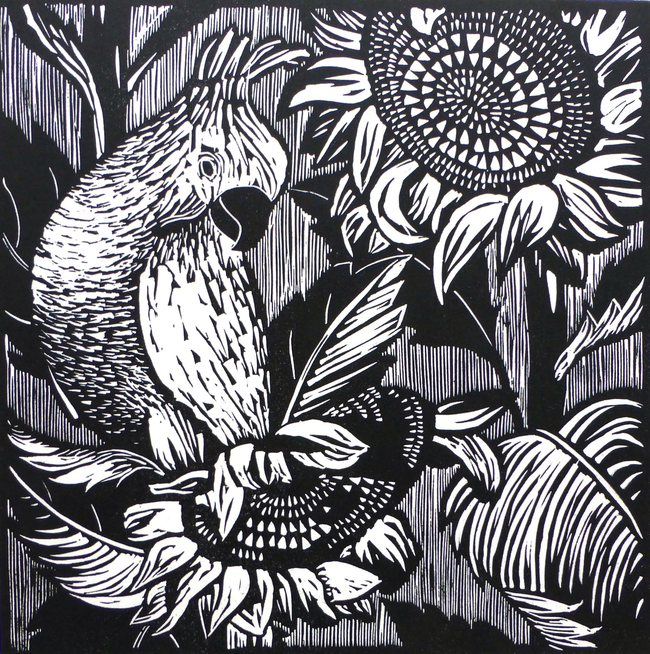 Cockatoo II   Linocut, 2016  Edition of 4  Image size: 20 cm x 20 cm  Paper size: 28.5 cm x 36.5 cm  $70
