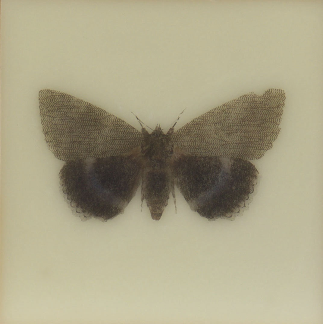 Paper Wings Nonpareil   2015 Encaustic on panel 6 in. x 6 in.
