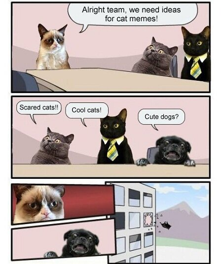 Funny-Animals-Memes---meanwhile-at-the-cat-meme-factory.jpeg