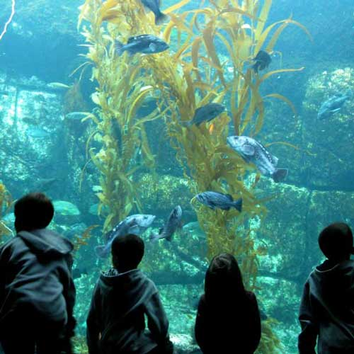 Scripps Aquarium is perfect for kids and adults alike.